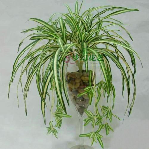 Best Plants For Purifying Air Lists Coorank